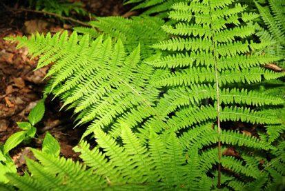 4465846_páfrány-erdő-gyönyörű-zöld-délután-nap