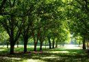 Silvoterapia, medicina pădurilor