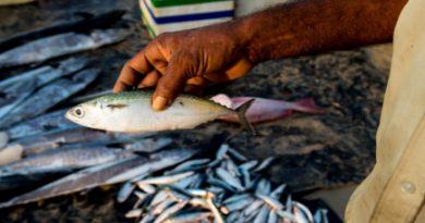 20140802-sri-lankan-food-fish-sri-lanka-naomi-tomky