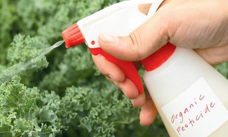 natural-pesticide-organic