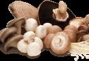 Ciupercile, o farmacie sub pălărie