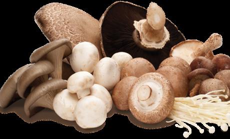 Ciupercile pot inlocui carnea in regimurile de slabit – Delmark