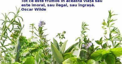herbal-01-hd-photo-48718