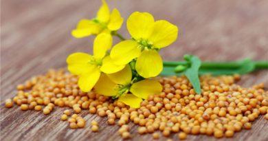 mustard-during-pregnancy