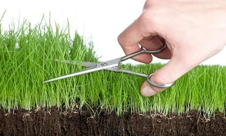 cut-grass-with-scissors
