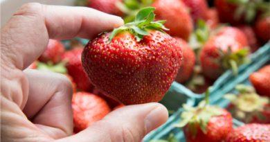 strawberry460